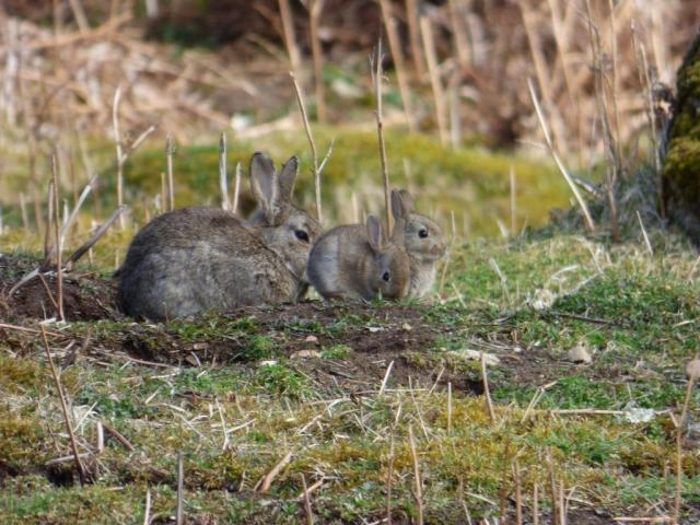 Baby bite-size bunnies