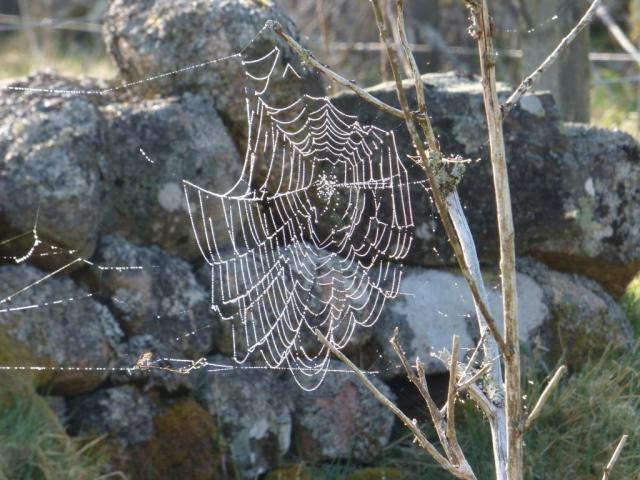 Dew-covered webs