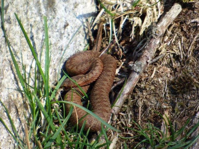 One of last year's baby adders