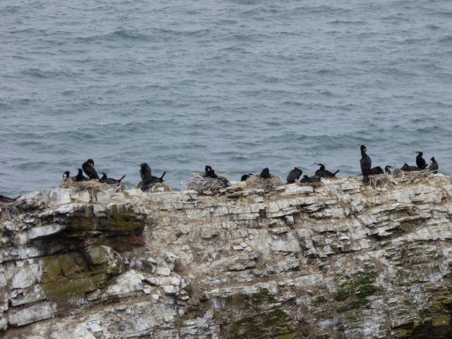 Cormorant colony. You smell it before you see it!