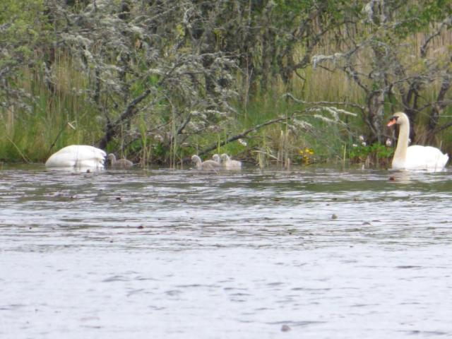 The parents were keeping their family well tucked away in the edge of the loch