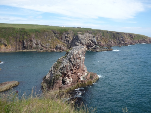 The cliffs at Longhaven