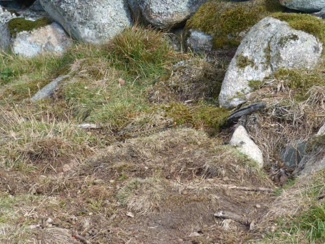 A well camouflaged adder