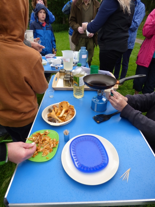 Wild food walk taster sessions
