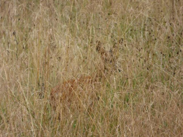 Spot the deer?