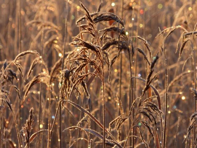 Bejeweled reeds