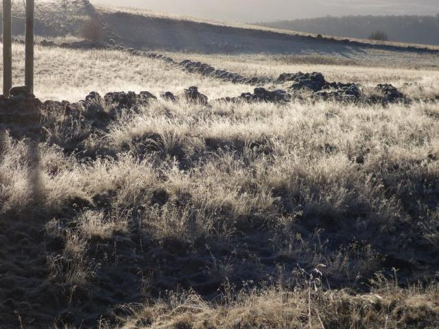 All the grass near Old Kinord was covered in frost Monday morning