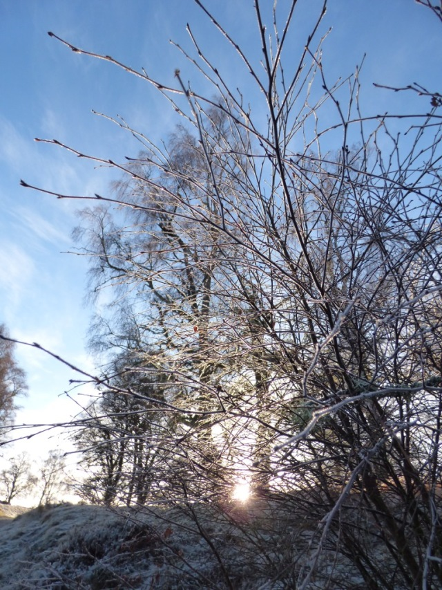 Sunrise in the frosty woodland