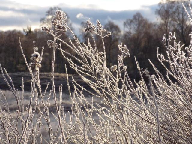 Backlit shrubs look amazing in the frost