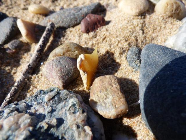 You occasionally find chips of flint among the shingle
