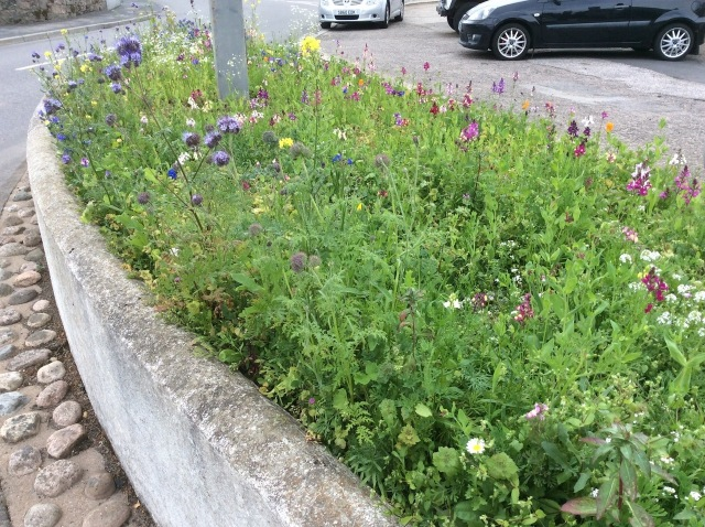 2 wildflower bed in Tarland