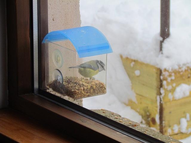 3 Blue tit in window bird feeder