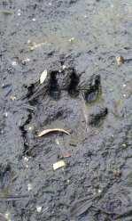 Otter Foorprints